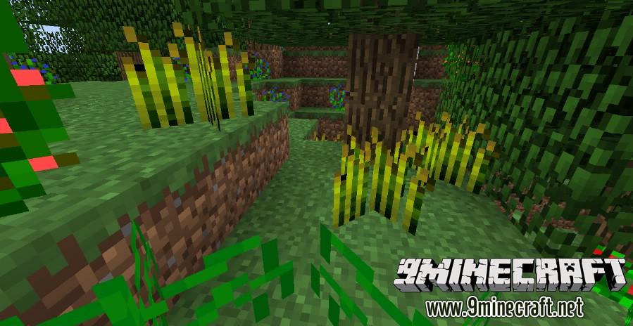 Plants-Plus-Mod-3.jpg